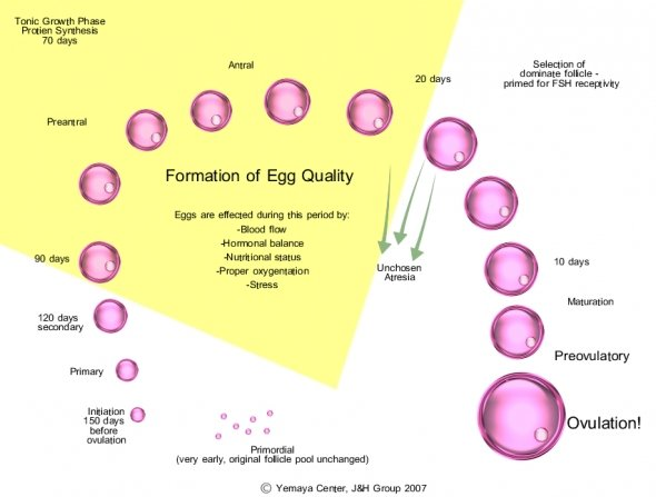 Does clomid increase quality of eggs